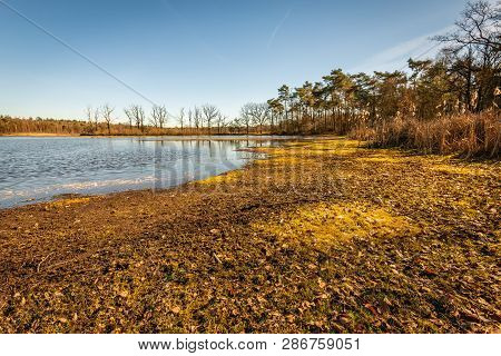 Dry Yellowed Colored Banks Of A Mere In The Dutch Nature Reserve Galderse Heide Near The City Of Bre