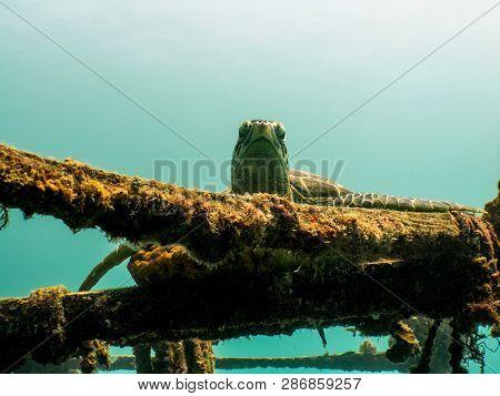 Sea Turtle Resting On Ship Wreck - Mabul Island, Borneo, Malaysia