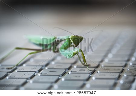 Software Bug Metaphor, Green Mantis Walks On A Laptop Keyboard, Macro Photo With Selective Focus