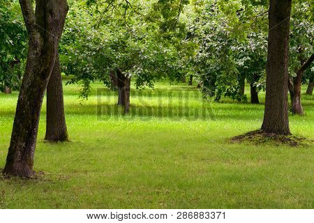 Well-kept Park With Bright Green Grass And Trees With Leaves