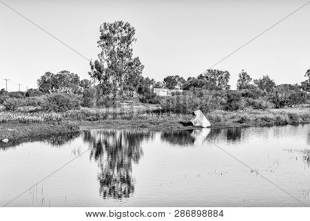 Reflections In A Pond At Willemsrivier In The Northern Cape Province. Monochrome