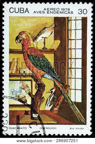 Luga, Russia - February 17, 2019: A Stamp Printed By Cuba Shows The Cuban Red Macaw - A Species Of M
