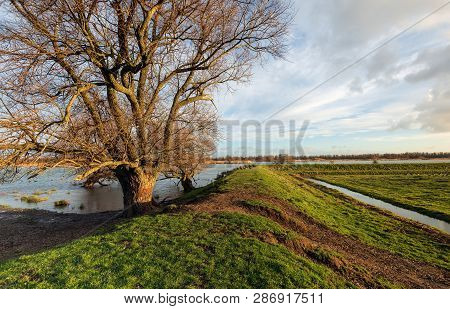 Bare Tree In The Foreground Of A Flooded Landscape In The Dutch National Park Biesbosch. On The Rop