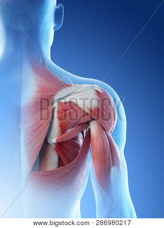 3d rendered illustration of a mans anatomy of the shoulder