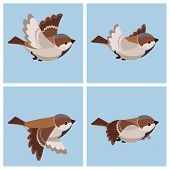 Vector illustration of cartoon flying House Sparrow (male) sprite sheet. Can be used for GIF animation poster