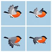 Vector illustration of cartoon flying bullfinch (male) sprite sheet. Can be used for GIF animation poster