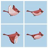Vector illustration of cartoon flying Cardinal Bird (female) sprite sheet. Can be used for GIF animation poster