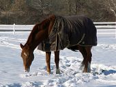 horse wearing blanket in the snow poster