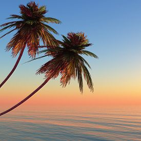 Palms island at sunset sea.3D render