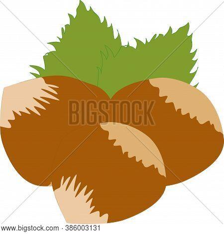Vector Realistic Illustration Of Whole Hazelnut, And Green Hazel Leaves