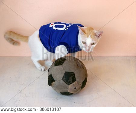 Cat Wears Blue Shirt Of Japan National Football Team With Old Soccer Ball.