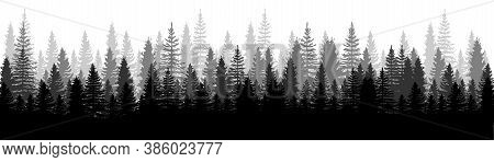 Forest Panorama View. Pines. Spruce Nature Landscape. Forest Background. Set Of Pine, Spruce And Chr