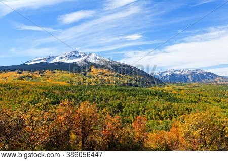 Golden Leaves Of Aspen Trees In The Beautiful Rocky Mountains Of Colorado. East And West Beckwith Mo