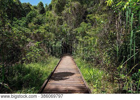 An Elevated Boardwalk Into Native Wetlands Enabling Pedestrians To Cross Marshy Land And To Protect