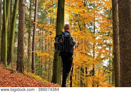 Autumn Walks And Travel. A Traveler With A Backpack In The Autumn Forest.fall.sports And Hiking In T