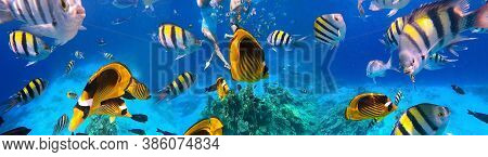 Underwater Colorful Tropical Fishes At Coral Reef At Red Sea. Blue Water In Sinai, Egypt. Couple Sno