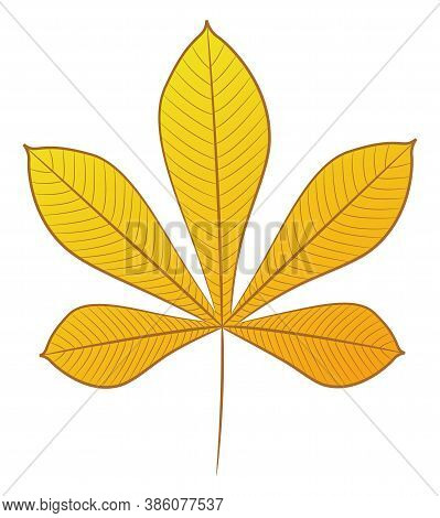 Chestnut Leaf With Veins. Autumn Yellow. Isolated Object On A White Background. Vector Illustration.