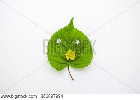 Cheerful Smile Made From Flowers Petal On Green Leaf. The Concept Of Healthcare And Alternative Herb