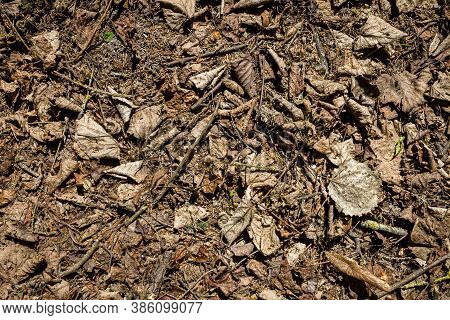 Natural Pine Forest Ground With Some Leaves, Twigs And Seeds. Forest Soil Texture Background