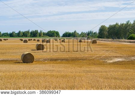 Haystack Rolls On Agriculture Field Landscape In Autumn. Haystack Harvesting Field. Agriculture Hays