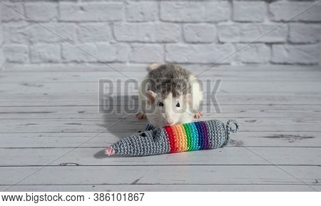 A Cute Decorative Black And White Rat Sits Next To A Knitting Rat Doll. Concept: Year Of The Rat Acc