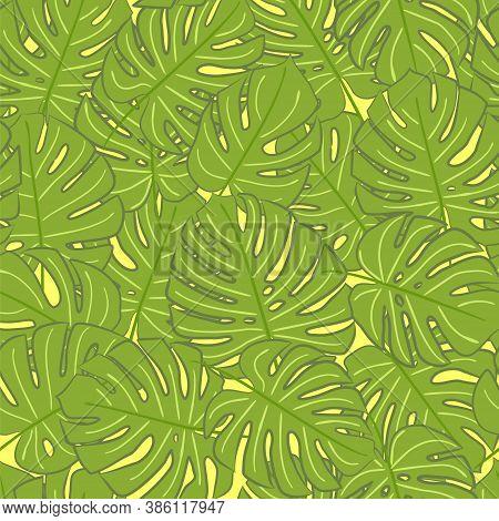 Seamless Monstera Pattern. Monstera Background. Vector Pattern. Monstera Leaves. Jungle Pattern. Sum