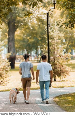 Back View Of Teenager Son And Father Walking With Golden Retriever On Asphalt