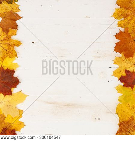 Many Colored Maple Leaves Lie On A White Textured Wooden Table. Frame Of Autumn Leaves. Copy Space I