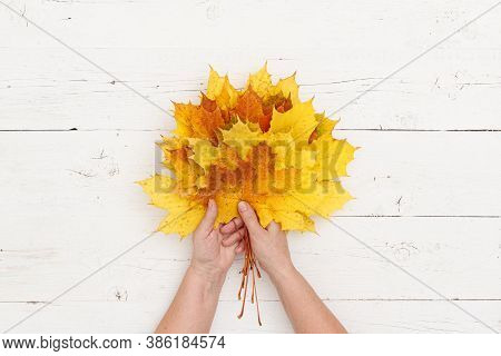 Hands Of An Elderly Woman Holding A Bouquet Of Maple Leaves Of Different Colors On A White Wooden Ta