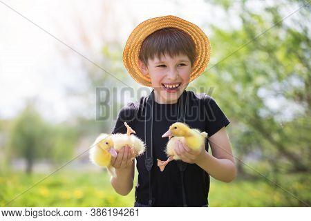 Happy Boy Holding Ducklings On The Background Of Nature. Child And Ducklings.