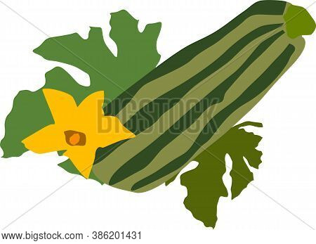 Zucchini, Zucchini Vegetables, Vegetarianism, Isolated On A White Background