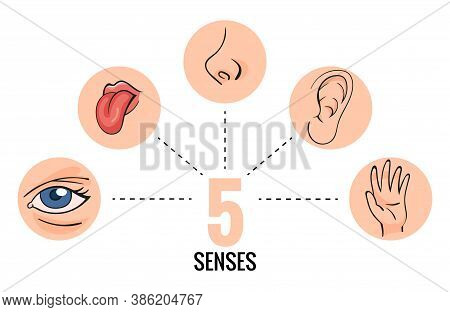 Sensory Organs. Nose Smell, Eyes Vision, Ears Hearing, Skin Touch, Language Taste And Taste Buds. Ca