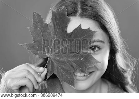 Instead Of Sugar. Ingredient In Baking And Sweetener. Maple Syrup. Little Child Hold Maple Leaf. Sma