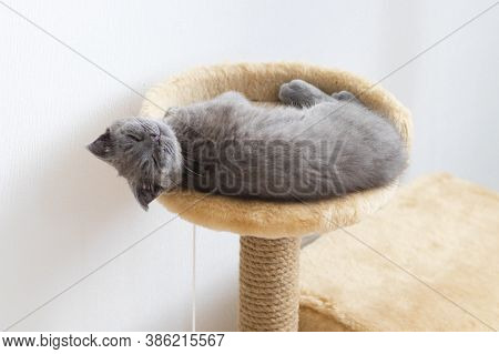 The Red-haired Striped Kitten Purrs, Fingering With Clawed Legs, Lying On A Wooden Round Stool.