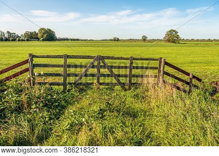 Skewed And Weathered Old Wooden Gate On The Edge Of A Meadow In A Dutch Polder. The Cows Are In A Me