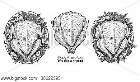 Vector Carcass Of Chicken Or Turkey, Hand Drawn Baked Poultry. Engraving Vintage Food.