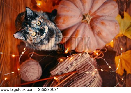 Flat Lay Of A Cute Kitten, A Round Ripe Pumpkin, Autumn Fallen Leaves And A Knitted Multicolored Sca