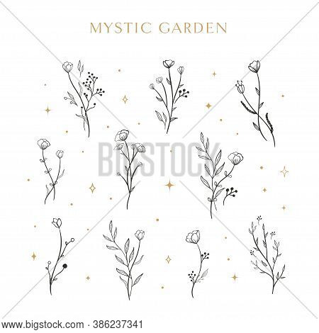 Flowers. Collection Of Isolated Florals Sketch On White Background. The Line Art Doodle Design With