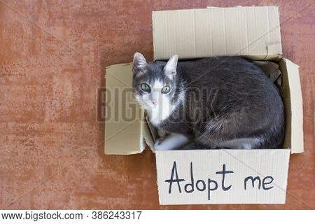 A Gray-white Adult Cat Sitting In A Cardboard Box With The Words