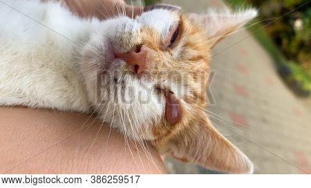 Feline Herpesvirus Conjunctivitis A Form Of Primary Conjunctivitis Caused By The Highly Infectious F