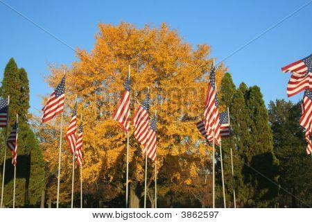 Autumn Flags