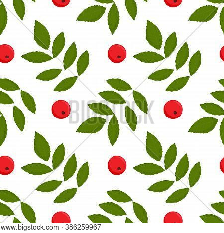 Seamless Colorful Autumn Pattern With Rowan Berries And Green Leaves. Floral Rowan Illustration For