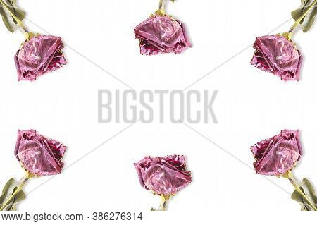 White Background With Repetition Of Dry Red Roses. Publicity Background. Concept Love
