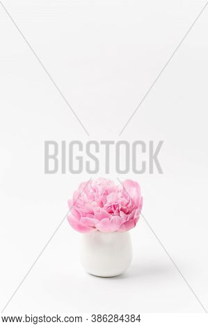 Innocence And Delicacy Minimalistic Concept, One Single Flower Of Pink Peony In Small Vase On White