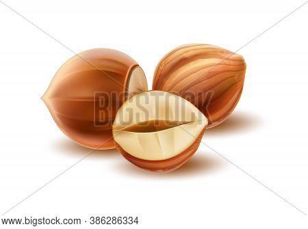 Vector Realistic Hazelnut Kernels And Peeled Half