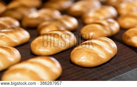 Fresh Hot Baked Breads On Automated Production Line Bakery. Manufacture Industrial