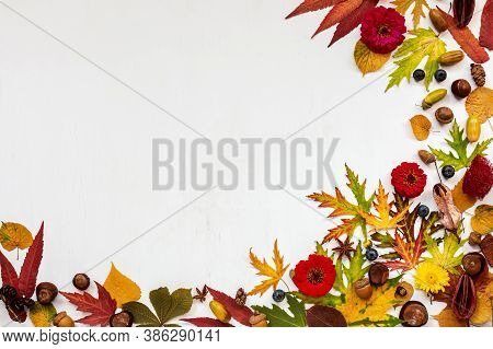 Autumn Composition. Dried Leaves, Flowers, Berries, Acorns, Chestnuts, On White Background. Autumn,