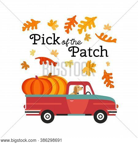 Red Farm Truck With Pumpkins Flat Color Vector. Fall Season Pumpkin Harvest Pick Of The Patch Backgr