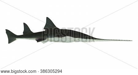 Onchopristis Sawfish Side Profile 3d Illustration - This Predatory Shark Onchopristis Sawfish Lived