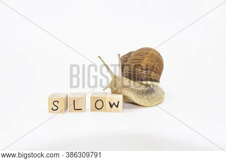 Beautiful Grape Snail Move To Wooden Cubes. On Cubes Written Word Slow